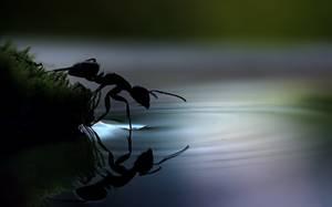 La beauté Animale.... Citations en images