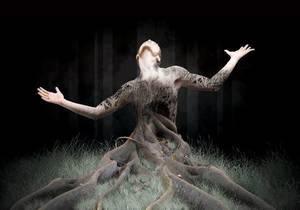 Les arbres.... laissons les vivre..... L'arbre en images et citations