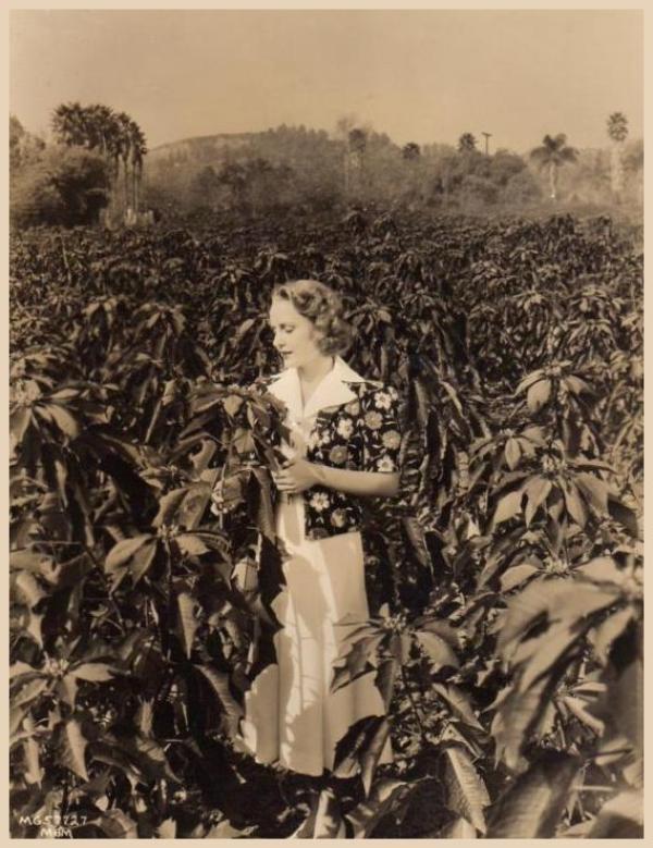 Madge EVANS '30 (1er Juillet 1909 - 26 Avril 1981)