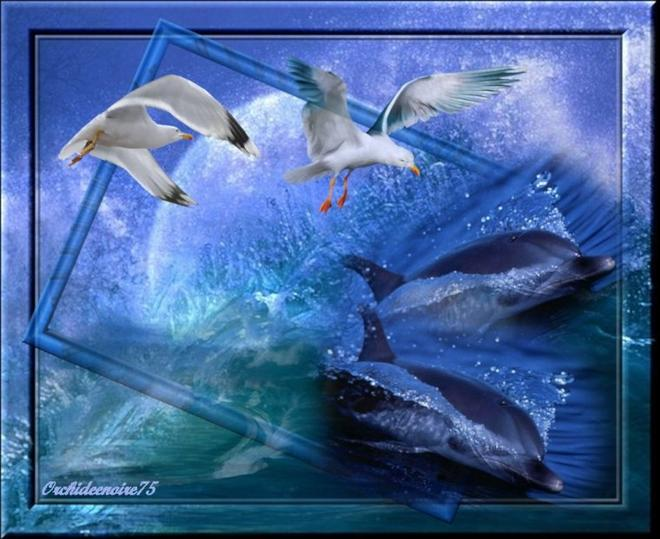 Le bonheur pour  un dauphin est d'exister, pour l'homme, de le savoir et de s'en emmerveiller