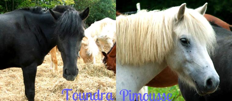 Pimousse & Toundra, c'est l'amour fou !