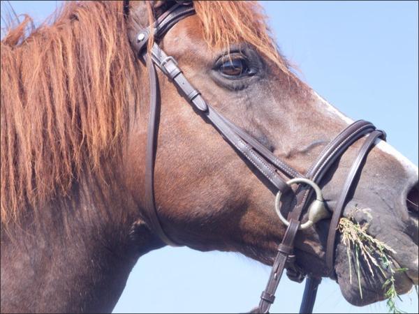 Le cheval est pour l'homme se que les ailes sont pour l'oiseau.