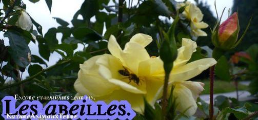 Les abeilles  ☼