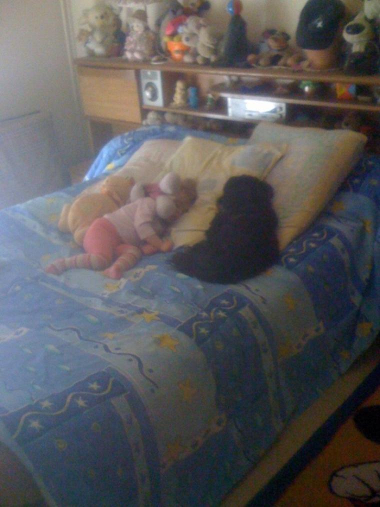 mon chien et la crevette qui dort :)