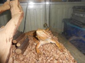 Nos reptiles .