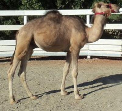 Fiche d'identité pour me reconnaître dans la rue ^^ et pour ne plus me confondre avec un chameau !!!!