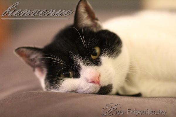 ♥ BIENVENUE sur Pipo Fripouille, des chats pas comme les autres  ♥