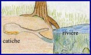 La Loutre de Rivière