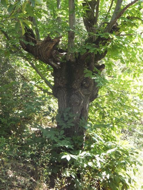 Forêts hantées  ou imagination débordante ?
