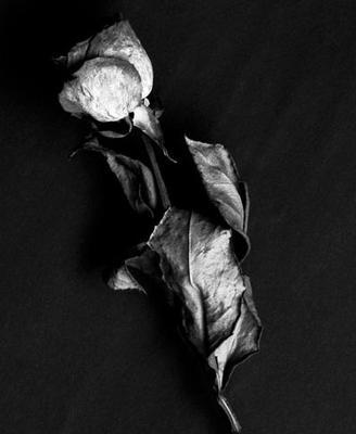 Une rose à la main