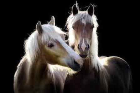 On est amis pour la vie!!!