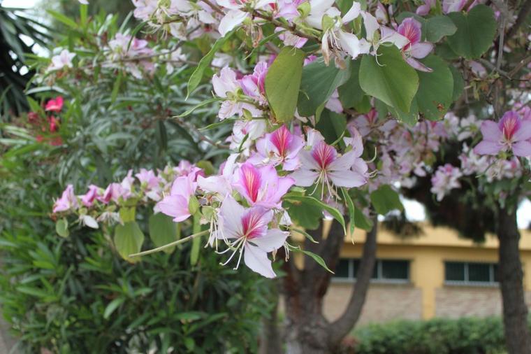 Un arbre dont je ne connais le nom