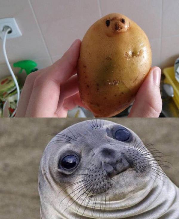 quand tu remarque que ta patate...