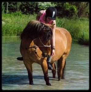♥ Le cheval est pour l'homme comme les ailes pour l'oiseau ♥