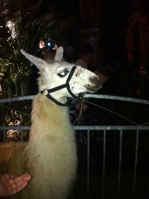 En direct de la soirée Serge le Lama