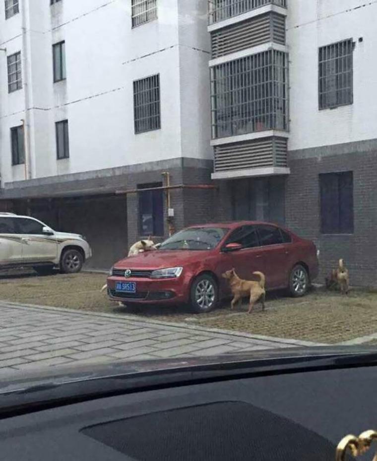Un chien se venge sur une voiture
