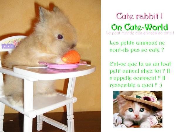 Article 004 ~ Catégorie Cute animals
