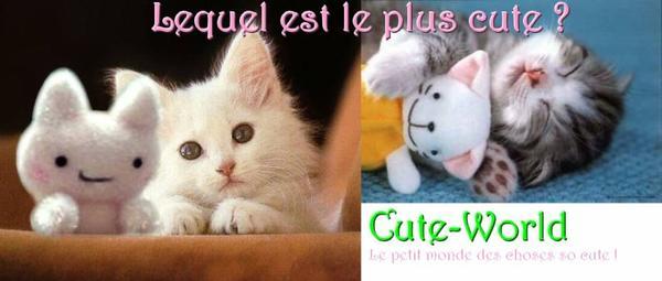 Article 007 ~ Catégorie Cute animals