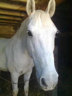 ♥♥ L'air du paradis est celui qui souffle entre les oreilles d'un cheval ♥♥