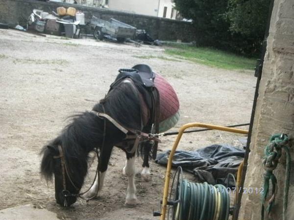 athos poney de célia