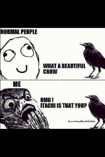 les corbeaux: les gens normaux VS moi