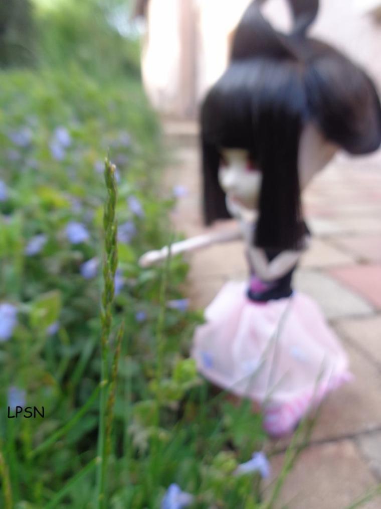 séance photo de koyomi dans mon beau jardin ^^ (regroupement de 2 séances...) fin ^^