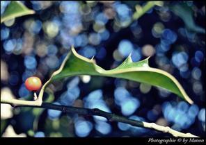 Manon laurent photographie © NIKON D3000 ARTICLE: 89
