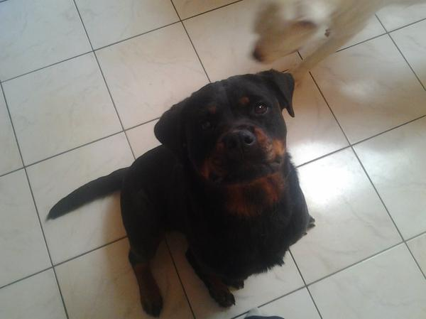 Mes 2chiens