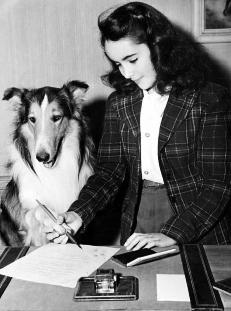 """LA PERIODE DES LASSIE / Liz joue dans """"Fidèle Lassie"""" (Lassie Come Home), film américain réalisé par Fred M. WILCOX, sorti en 1943, adapté du roman """"Lassie, chien fidèle"""" (Lassie Come Home) écrit en 1940 par Eric KNIGHT. / 3 ans après elle réitère dans """"Le Courage de Lassie"""" (Courage of Lassie ), film américain réalisé par Fred M. WILCOX, sorti en 1946."""