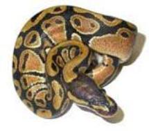 encore un python