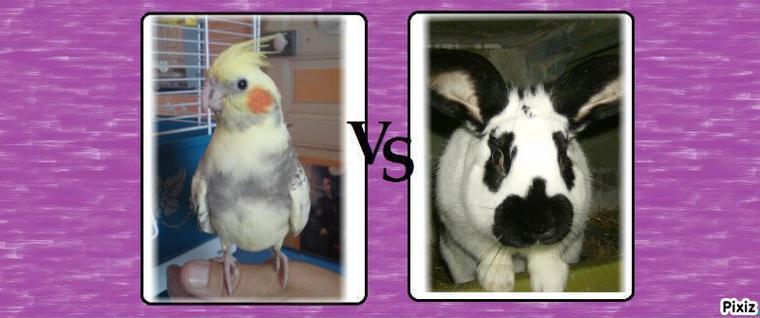 Kiwi vs Polux