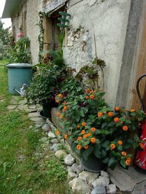 la nature reste généreuse en couleurs malgré la canicule qui l'a fait souffrir , des verts, du parme, du blanc, du rose, du violet, du bleu, du orange , du rouge....