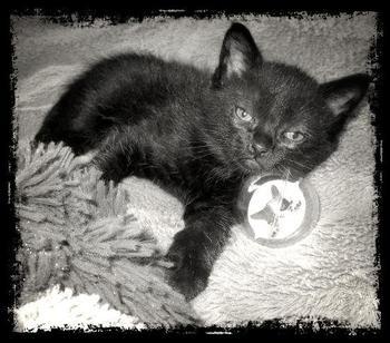 mon petit Isko
