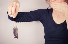 Comment se débarrasser des souris naturellement ?