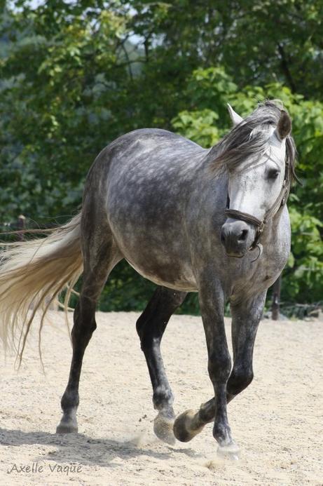 Ce n'est pas un cheval, c'est un partenaire de Dance....