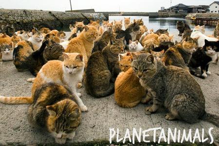 L'île aux chats - Wow !
