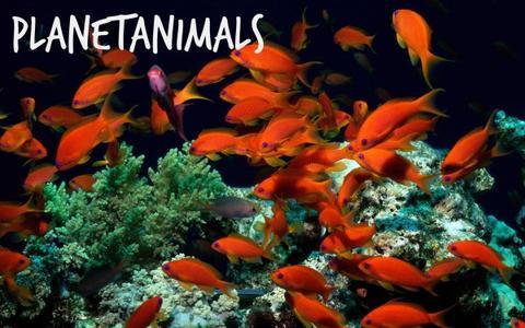 Les poissons - Tu le savais ?