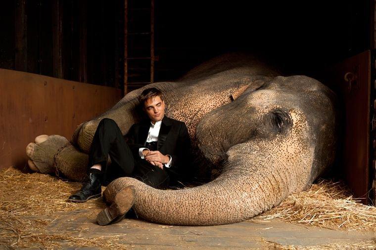 De l'eau pour les éléphants de Sara Gruen