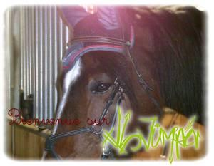 xlL-Jumper.Skaii'Horse.com - Bienvenue a tous...