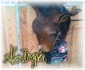 xlL-Jumper.Skaii'Horse.Com - Semaine du 18 Mars 2o13