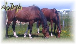 xlL-Jumper.Skaii'Horse.com - Un Peu de Soleil...