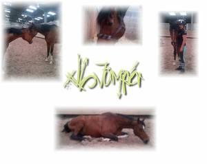 xlL-Jumper.Skaii'Horse.com - Tout va bien !!!