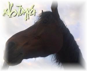 xlL-Jumper.Skaii'Horse.com - Fin Septembre...