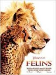 Le film FELINS
