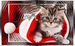 Bonnes fêtes !!!