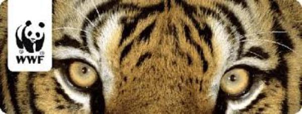 Le trafic de tigres... PÉTITION OU DON