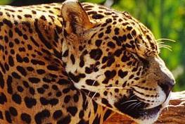 WWF NEWLETTER