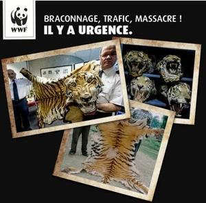 Avec le WWF, dites STOP au massacre des tigres !