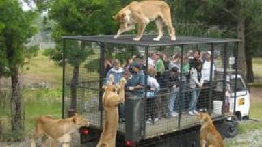 Des hommes dans une cage à la place de lions ?