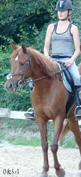 « naitre dans une écurie ne fait pas de toi un cheval.. »
